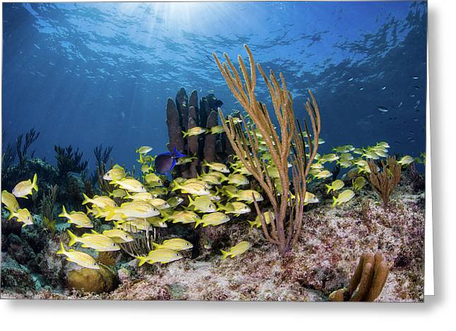 Fish Schooling Over A Caribbean Reef Greeting Card