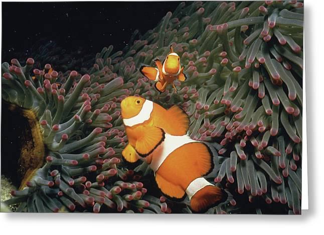 Fish Undersea, Okinawa Prefecture, Japan Greeting Card