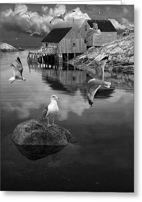 Fisherman's Wharf With Flying Gulls In Peggy's Cove Greeting Card by Randall Nyhof