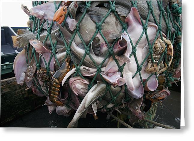 Fishing Dragger Hauls In Net Full Greeting Card by Jeff Rotman