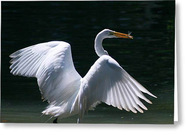 Fishing Egret Greeting Card