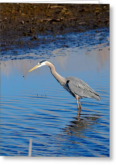 Fishing Greeting Card by Gary Wightman