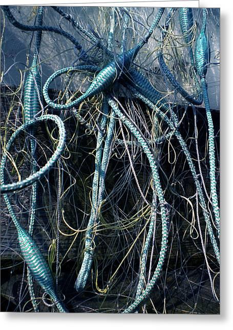 Fishing Net Play   Greeting Card by Colette V Hera  Guggenheim