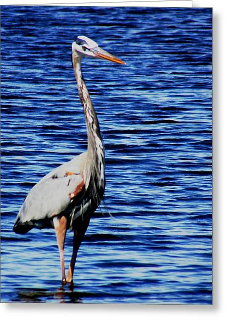 Fishing Greeting Card by Will Boutin Photos