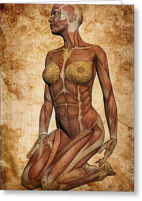 Fit Female Revealed Greeting Card by Daniel Hagerman