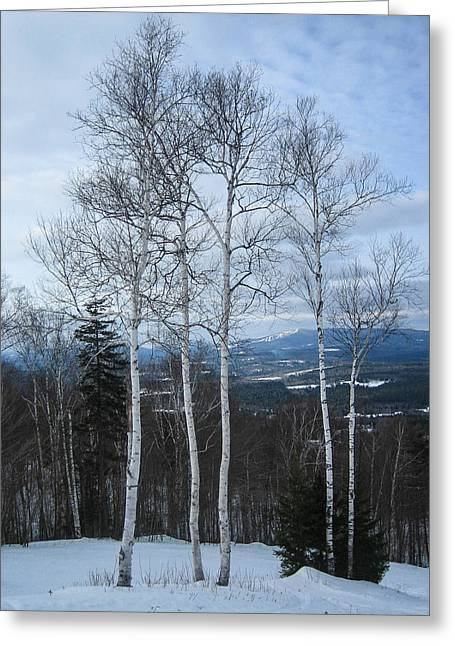 Five Birch Trees Greeting Card