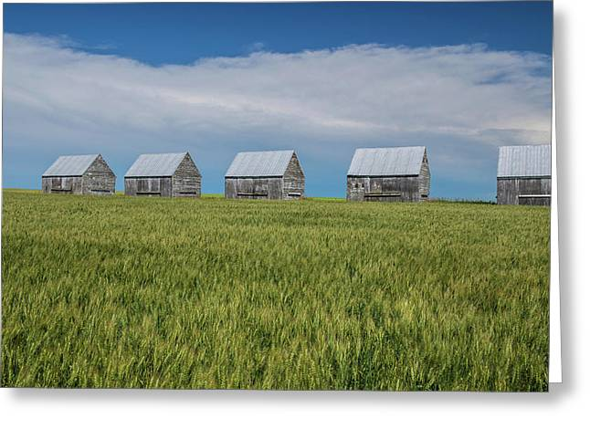 Five Granaries On Wheat Field, Alberta Greeting Card by Panoramic Images