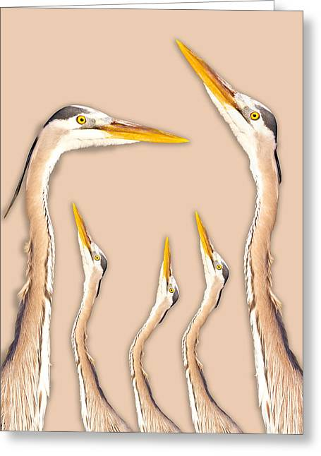 Five Herons Greeting Card by Betsy Knapp