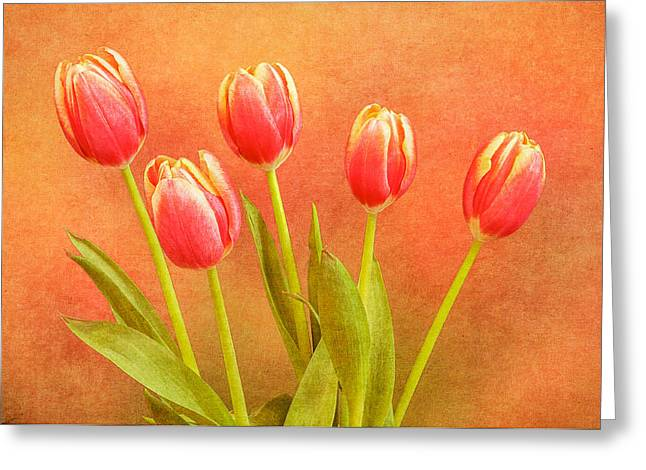 Five Tulips Greeting Card