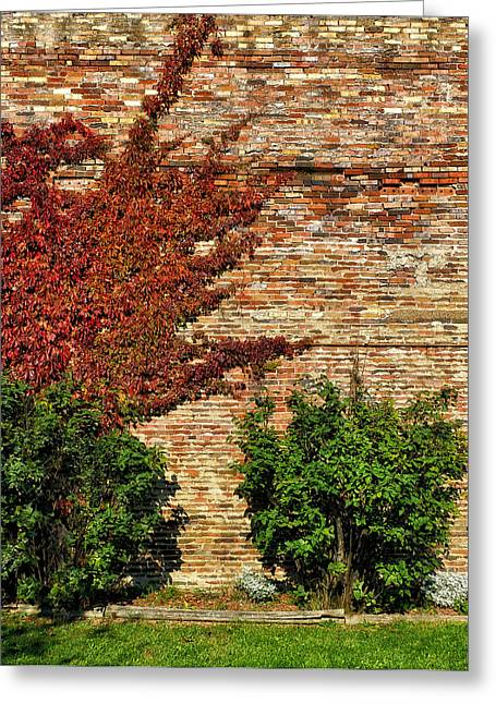 Vine Caressing Brick Wall Greeting Card