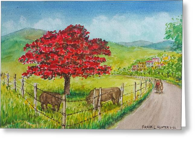 Flamboyan And Cows In Western Puerto Rico Greeting Card by Frank Hunter