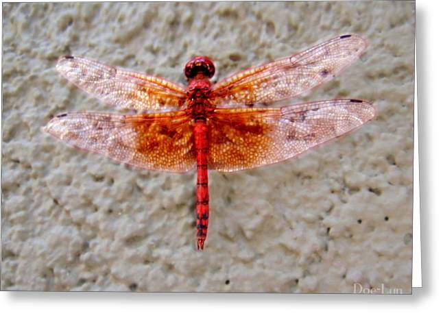 Flame Dragonfly  Greeting Card
