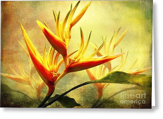 Flames Of Paradise Greeting Card