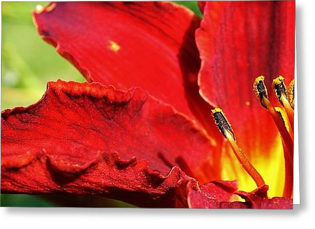 Flames Of Red Greeting Card