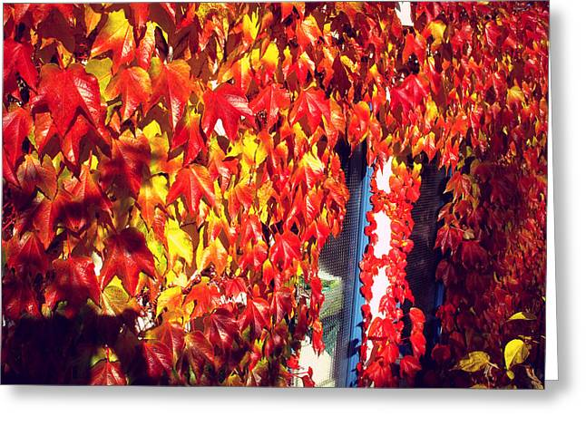 Greeting Card featuring the photograph Flaming Autumn Leaves by Art Photography