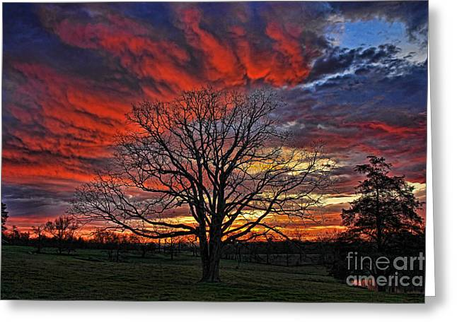 Flaming Oak Sunrise Greeting Card by Reid Callaway