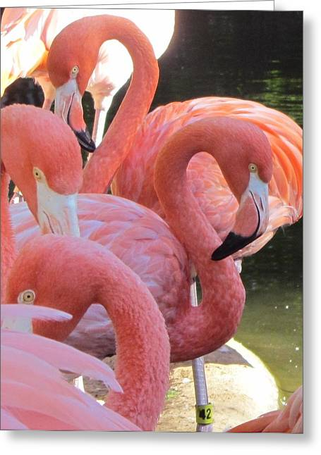 Flamingo 5 Greeting Card by Cathy Lindsey