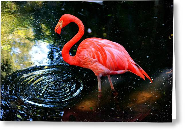 Flamingo 9 Greeting Card by Dan Dennison