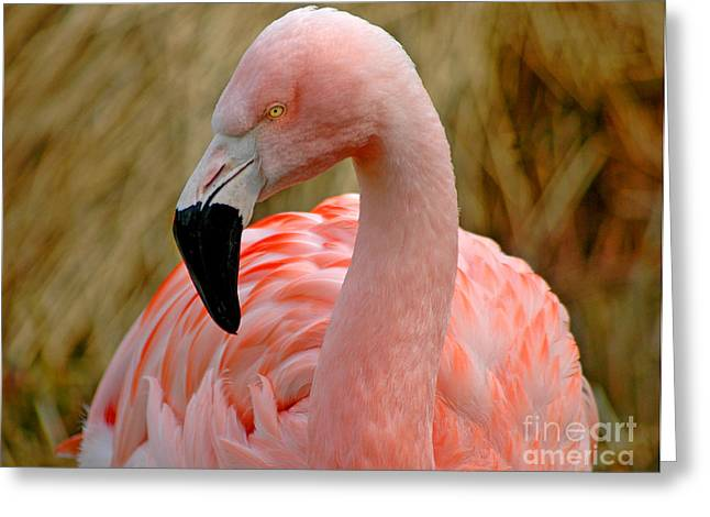 Greeting Card featuring the photograph Flamingo Art by Nick  Boren