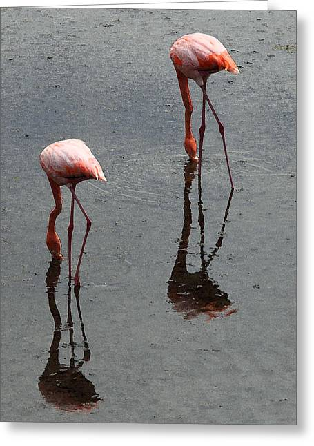 Flamingo Ballet Greeting Card