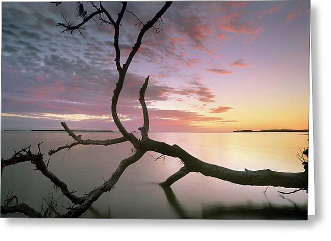 Flamingo Bay, Everglades National Park Greeting Card