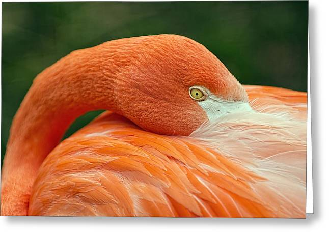 Greeting Card featuring the photograph Flamingo Closeup by RC Pics