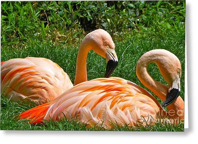 Flamingo Duo Greeting Card by Eve Spring