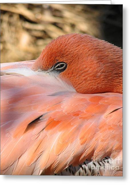 Greeting Card featuring the photograph Flamingo by Eva Kaufman