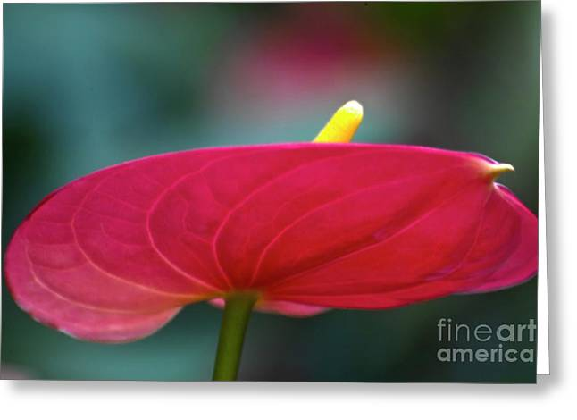 Flamingo Flower 1 Greeting Card by Heiko Koehrer-Wagner