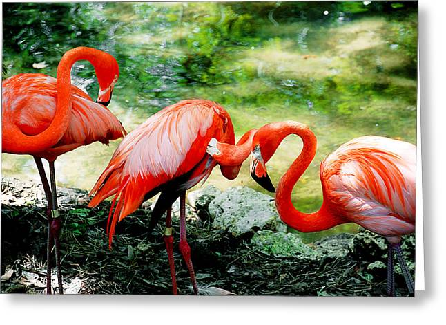 Flamingo Friends Greeting Card