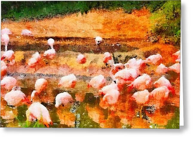 Flamingo Gathering Greeting Card