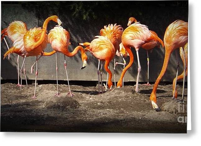 Flamingo Hangout Greeting Card