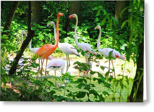 Flamingo Greeting Card by Oleg Zavarzin