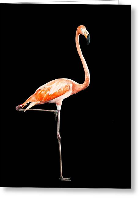 Flamingo On Black Greeting Card