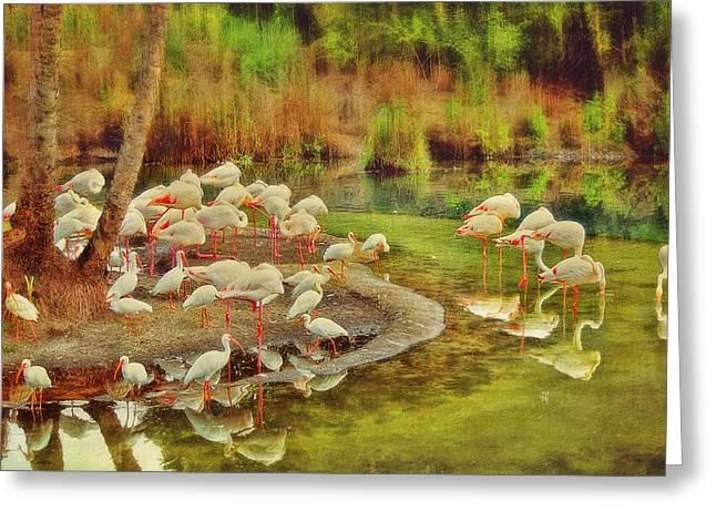 Flamingo Pond Greeting Card
