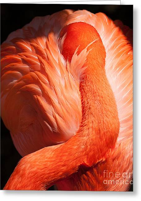 Flamingo Resting Greeting Card