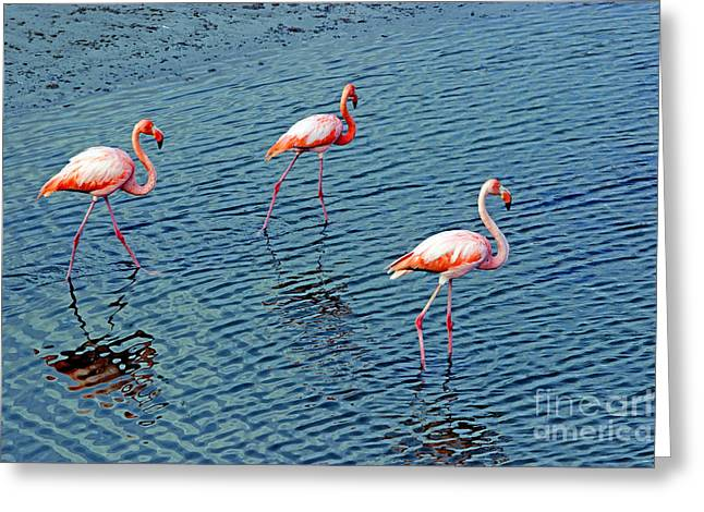 Flamingoes In The Galapagos Painting Greeting Card by Al Bourassa