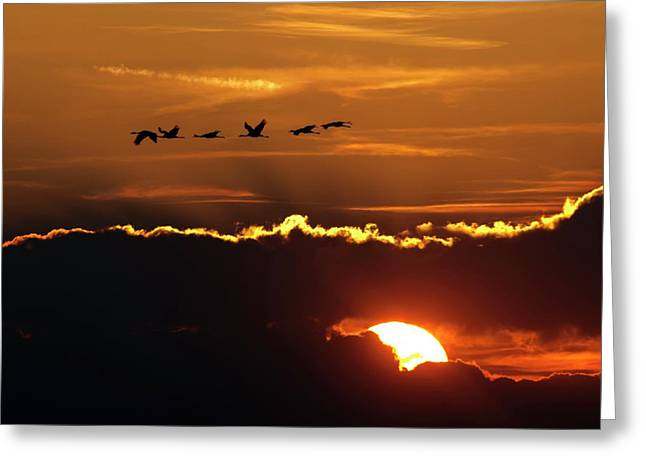 Flamingos At Sunset Greeting Card by Babak Tafreshi
