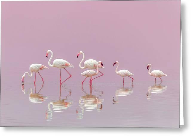 Flamingos Greeting Card by Eiji Itoyama