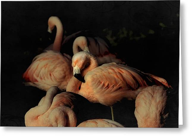 Flamingos In Repose Greeting Card by Kandy Hurley