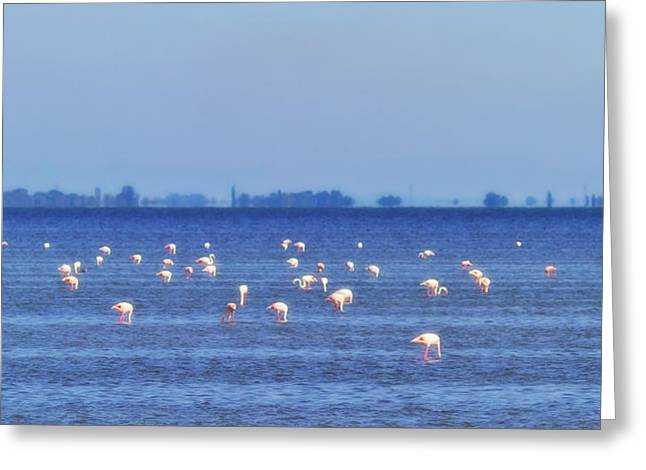 Flamingos In The Pond Greeting Card