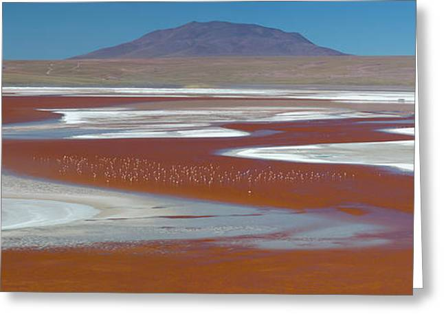 Flamingos On The Red Waters Of Laguna Greeting Card by Panoramic Images