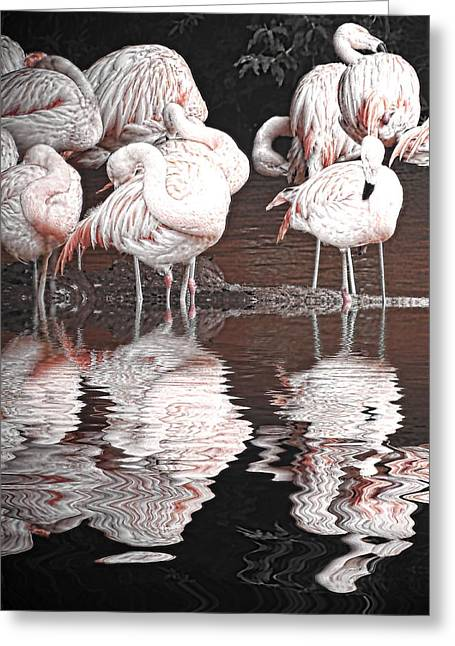 Flamingos Greeting Card by Sharon Lisa Clarke