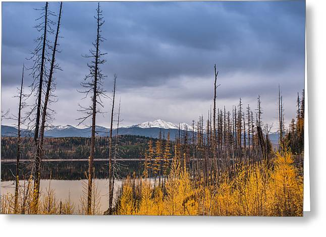 Greeting Card featuring the photograph Flathead National Forest by Adam Mateo Fierro