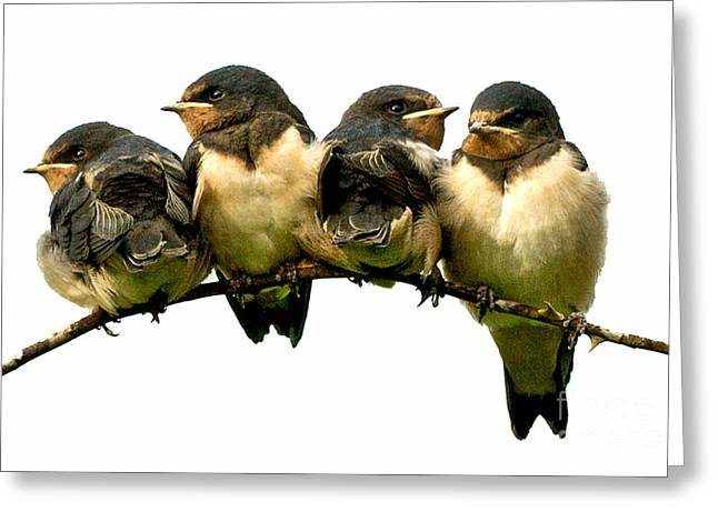 Fledglings Greeting Card