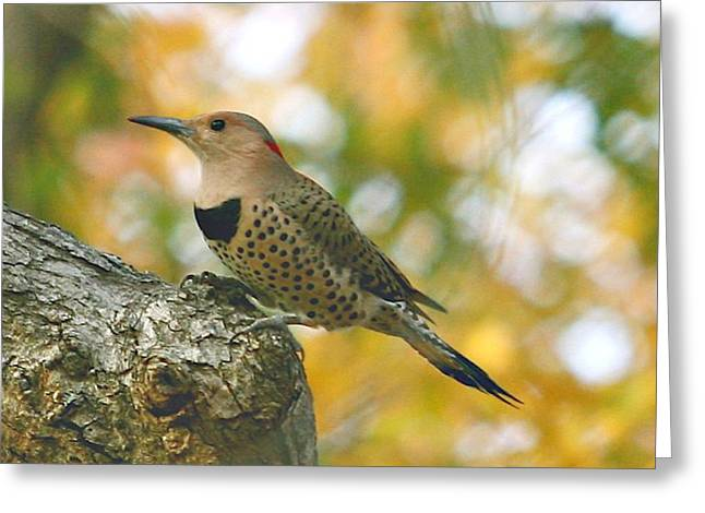 Flicker Greeting Card by Debbie Sikes