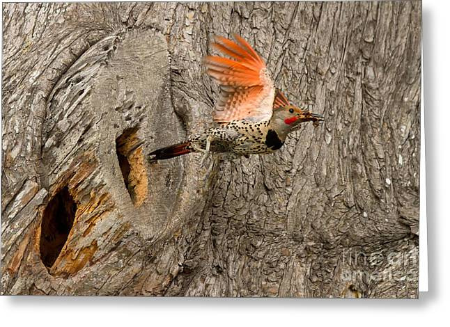 Flicker Flight Greeting Card