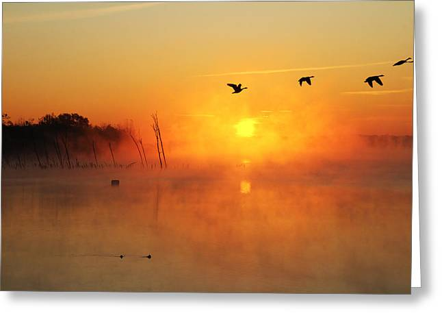 Flight At Sunrise Greeting Card by Roger Becker