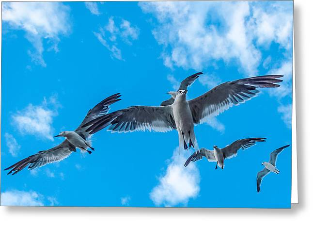 Flight Greeting Card by CarolLMiller Photography