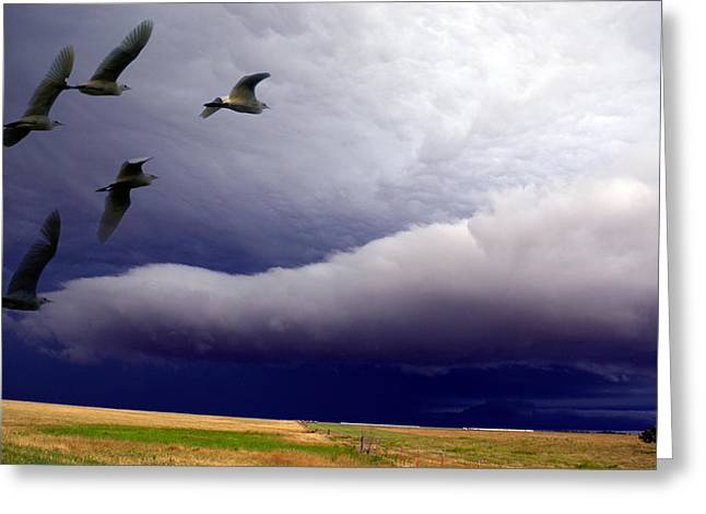 Flight Into The Storm Greeting Card